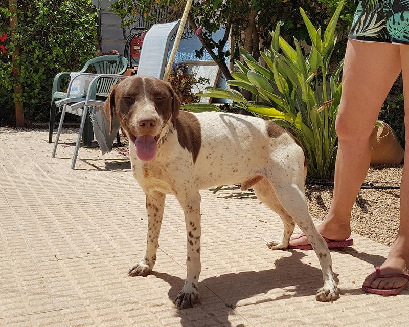 Bildertagebuch - Guiness: ein Hundekumpel fürs Leben - VERMITTELT - 29699995tz