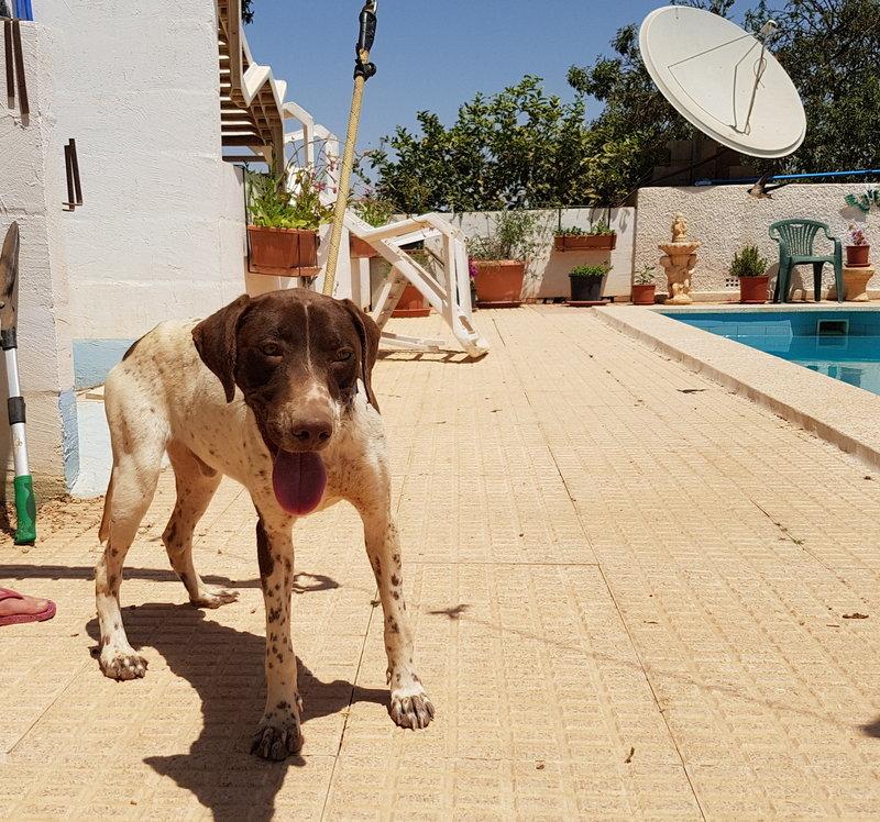 Bildertagebuch - Guiness: ein Hundekumpel fürs Leben - VERMITTELT - 29699996aa
