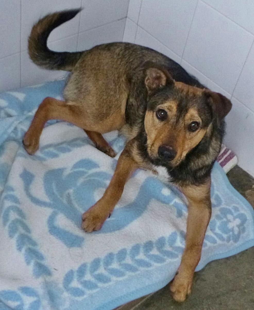 Bildertagebuch - Reex, ein gelehriger, anhänglicher Hundekumpel sucht seine Menschen... 29703494mu