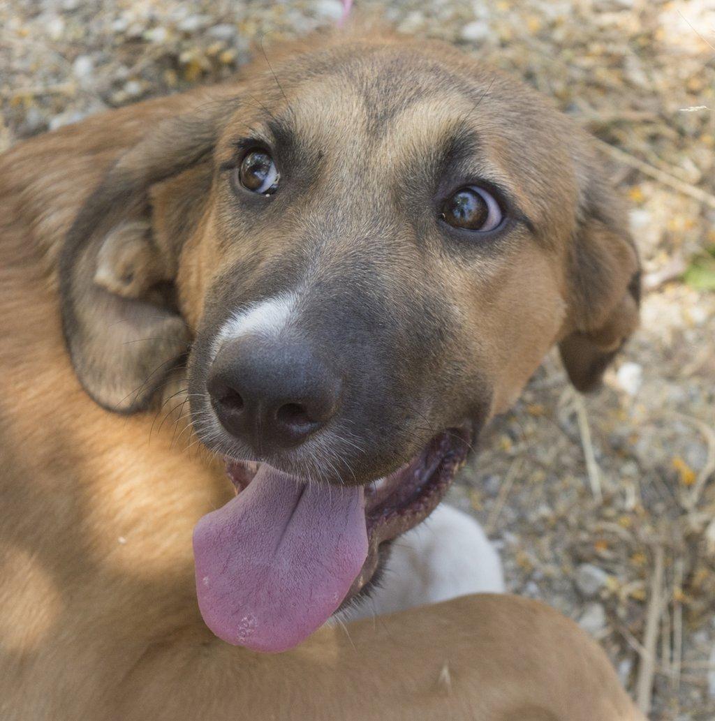 Bildertagebuch - Dina: wurde als Hundebaby wie Müll entsorgt, sie sollte sterben...VERMITTELT! 29759548ky