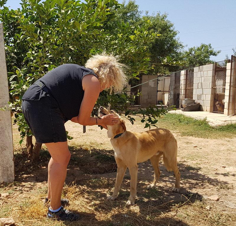Bildertagebuch - Romeo  II, ist ein echter Darling einfach ein Traum von Hundebub ...VERMITTELT! 29766439so