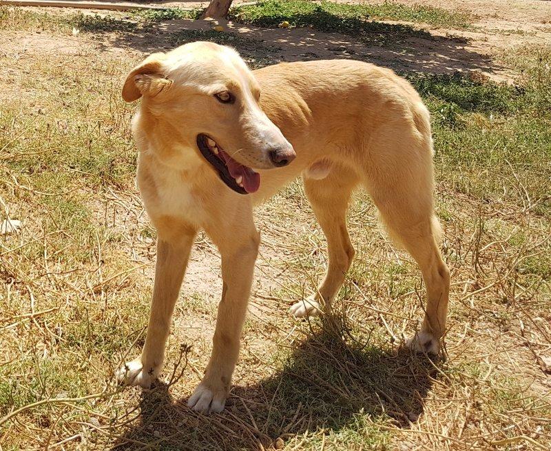 Bildertagebuch - Romeo  II, ist ein echter Darling einfach ein Traum von Hundebub ...VERMITTELT! 29766440ar