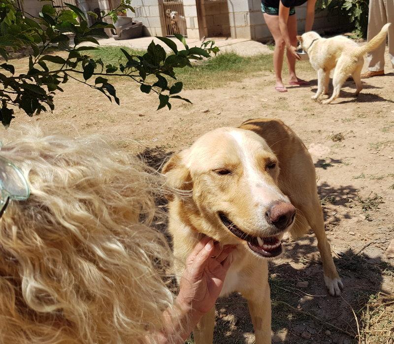 Bildertagebuch - Romeo  II, ist ein echter Darling einfach ein Traum von Hundebub ...VERMITTELT! 29766442td