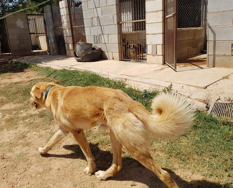 Bildertagebuch - Romeo  II, ist ein echter Darling einfach ein Traum von Hundebub ...VERMITTELT! 29766444sc