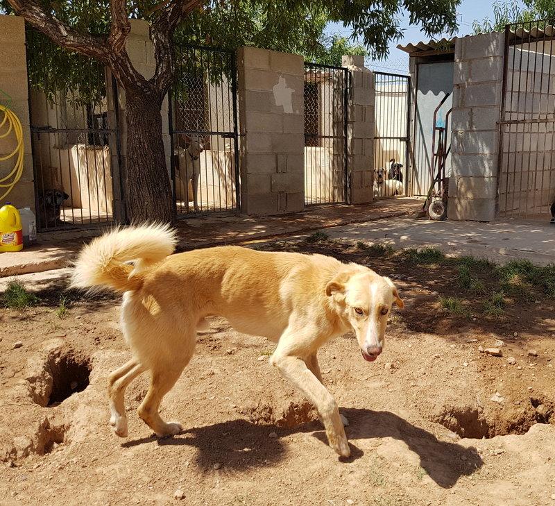 Bildertagebuch - Romeo  II, ist ein echter Darling einfach ein Traum von Hundebub ...VERMITTELT! 29766446vy