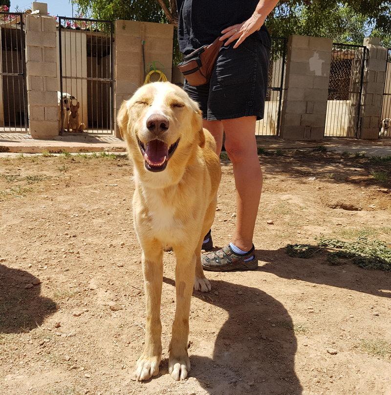 Bildertagebuch - Romeo  II, ist ein echter Darling einfach ein Traum von Hundebub ...VERMITTELT! 29766448on