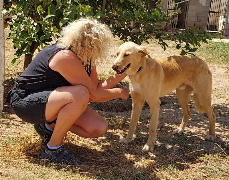 Bildertagebuch - Romeo  II, ist ein echter Darling einfach ein Traum von Hundebub ...VERMITTELT! 29766452lb