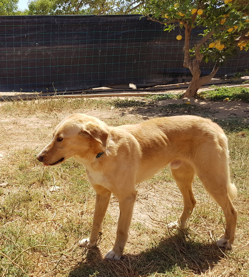 Bildertagebuch - Romeo  II, ist ein echter Darling einfach ein Traum von Hundebub ...VERMITTELT! 29766453vt