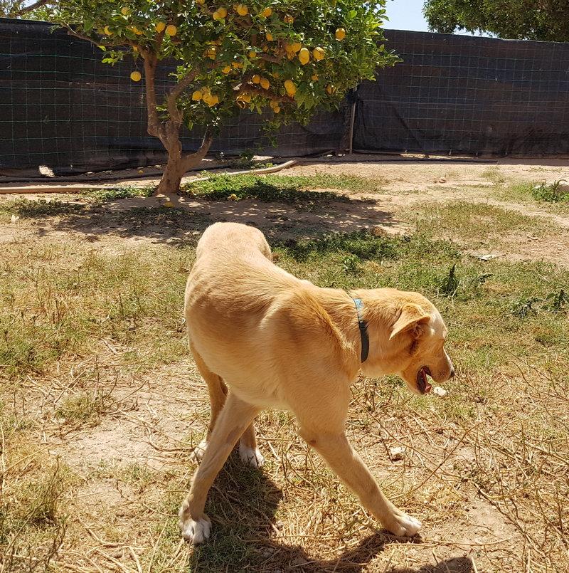 Bildertagebuch - Romeo  II, ist ein echter Darling einfach ein Traum von Hundebub ...VERMITTELT! 29766454yv