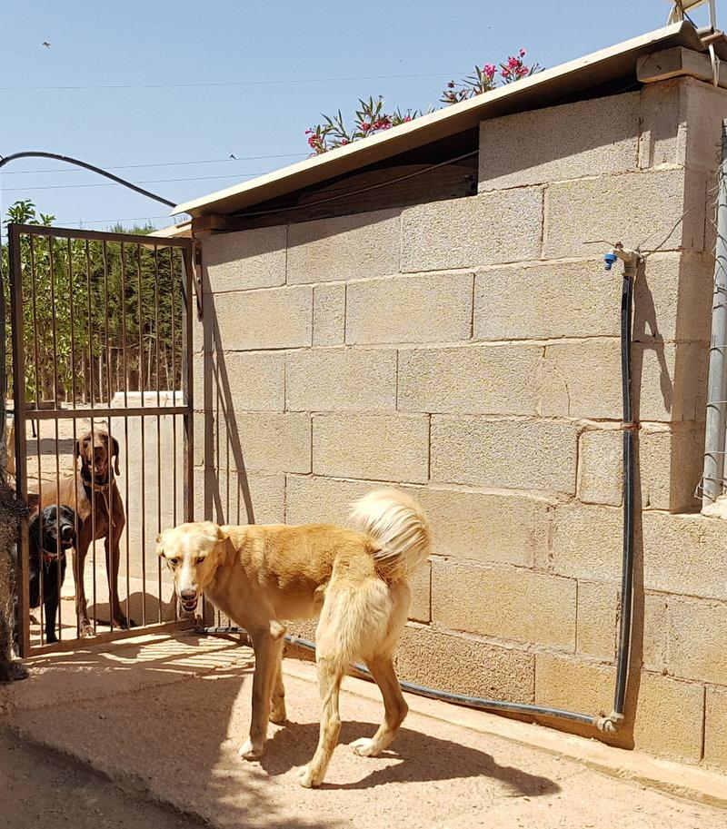 Bildertagebuch - Romeo  II, ist ein echter Darling einfach ein Traum von Hundebub ...VERMITTELT! 29766455cl