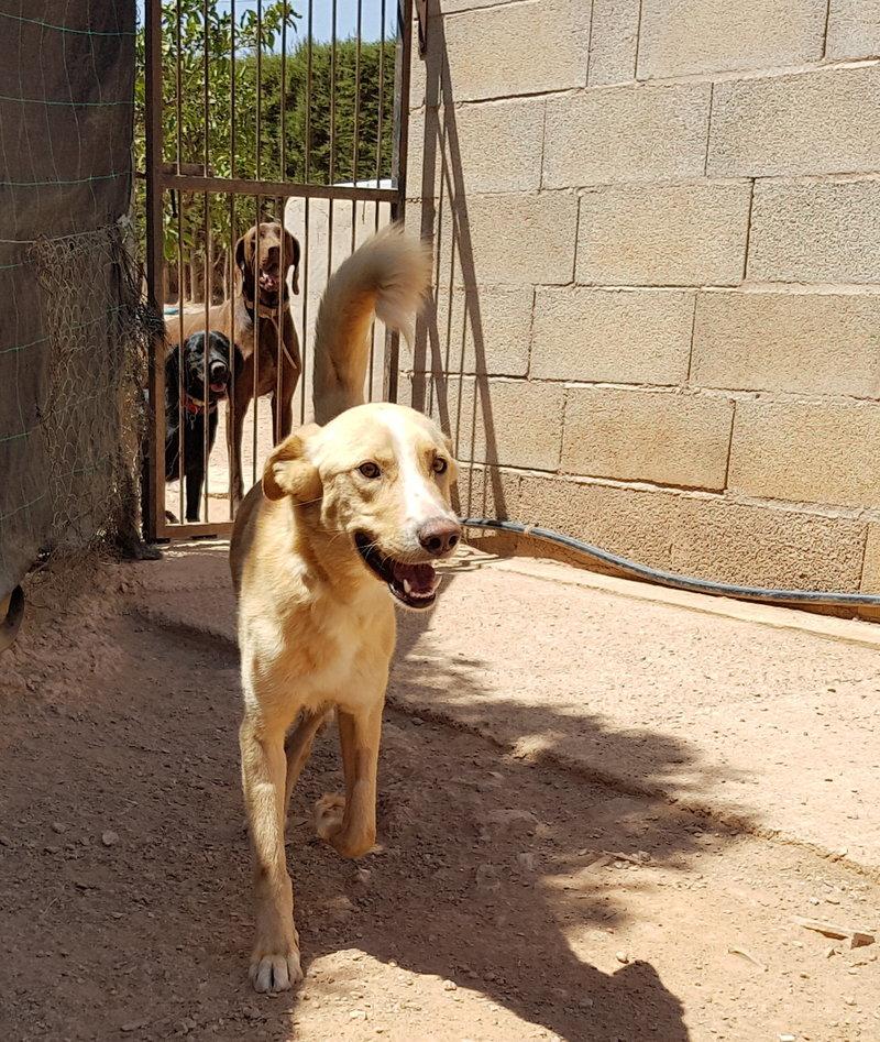 Bildertagebuch - Romeo  II, ist ein echter Darling einfach ein Traum von Hundebub ...VERMITTELT! 29766456cj