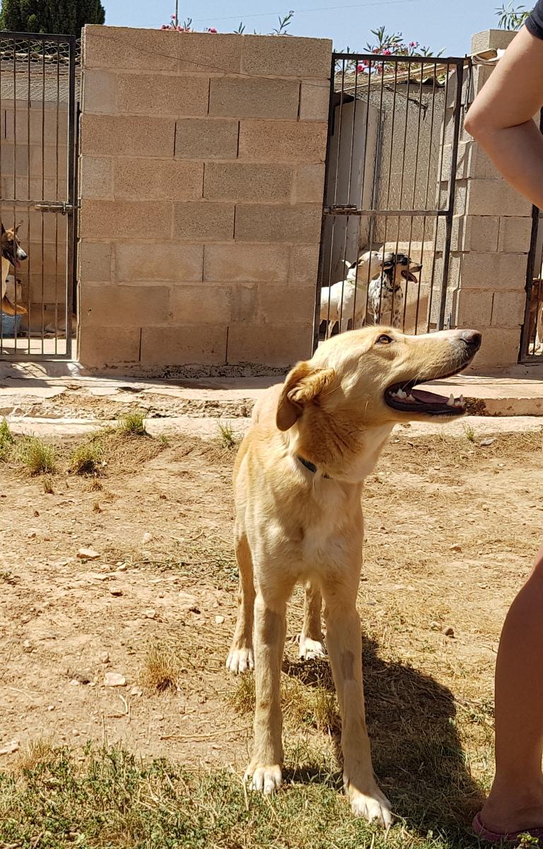 Bildertagebuch - Romeo  II, ist ein echter Darling einfach ein Traum von Hundebub ...VERMITTELT! 29766457wr