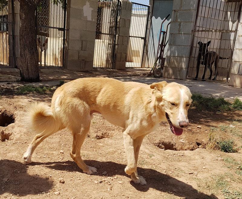 Bildertagebuch - Romeo  II, ist ein echter Darling einfach ein Traum von Hundebub ...VERMITTELT! 29766458gk