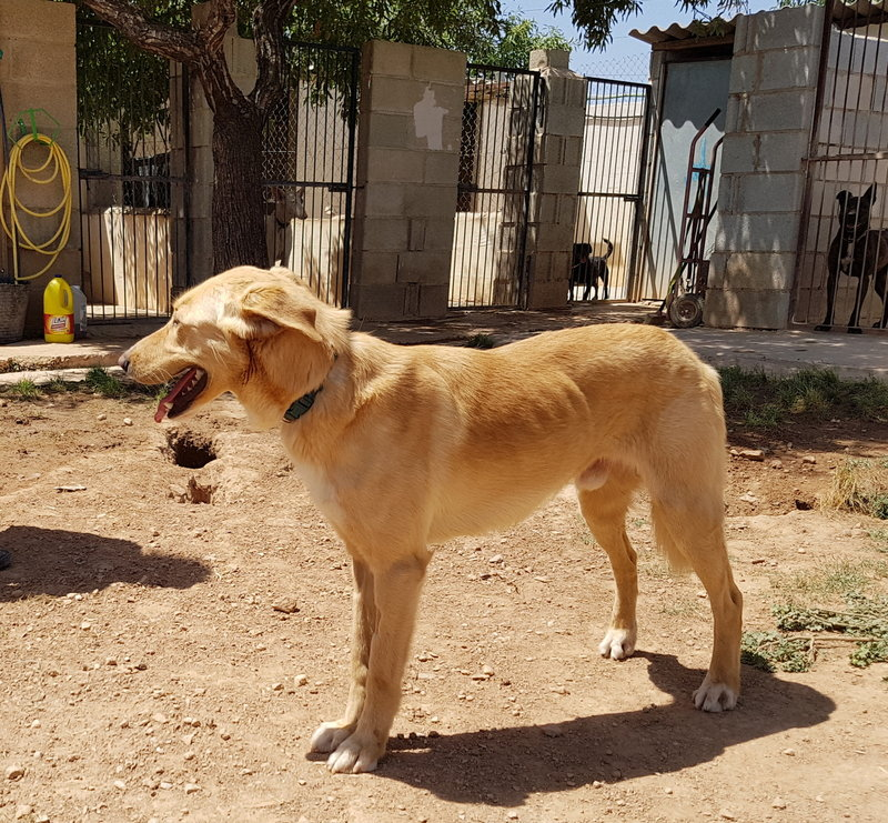 Bildertagebuch - Romeo  II, ist ein echter Darling einfach ein Traum von Hundebub ...VERMITTELT! 29766459tv