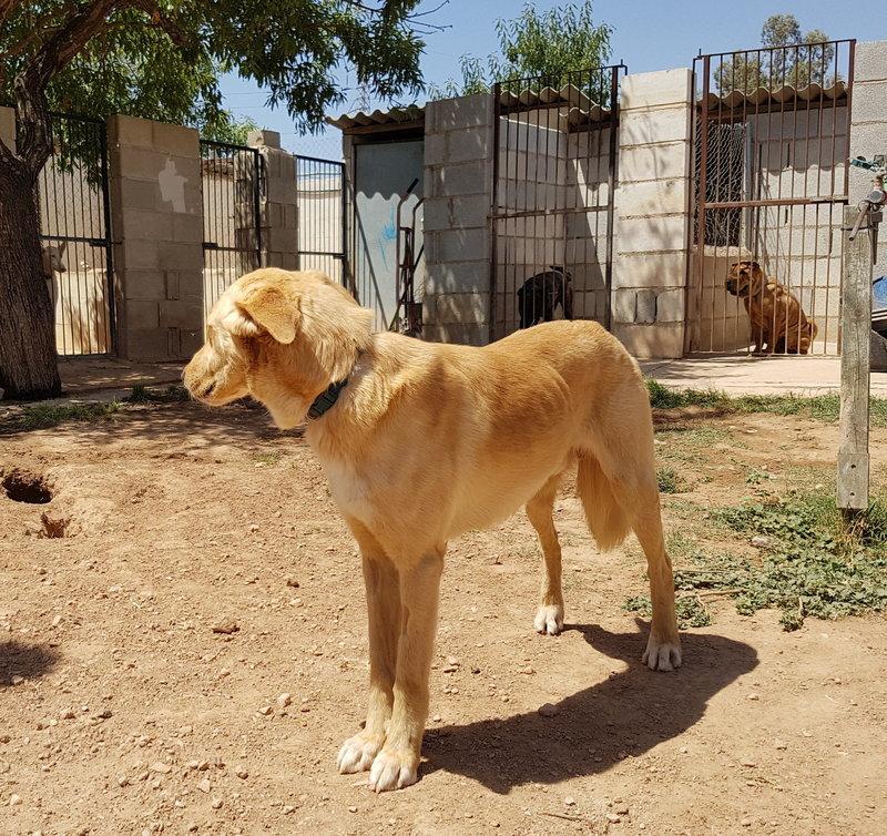 Bildertagebuch - Romeo  II, ist ein echter Darling einfach ein Traum von Hundebub ...VERMITTELT! 29766461fv