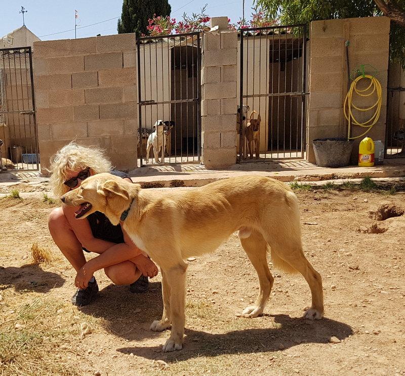 Bildertagebuch - Romeo  II, ist ein echter Darling einfach ein Traum von Hundebub ...VERMITTELT! 29766462ki
