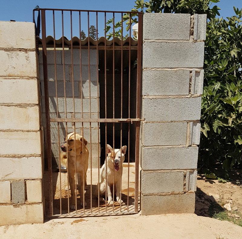 Bildertagebuch - Romeo  II, ist ein echter Darling einfach ein Traum von Hundebub ...VERMITTELT! 29766463yy