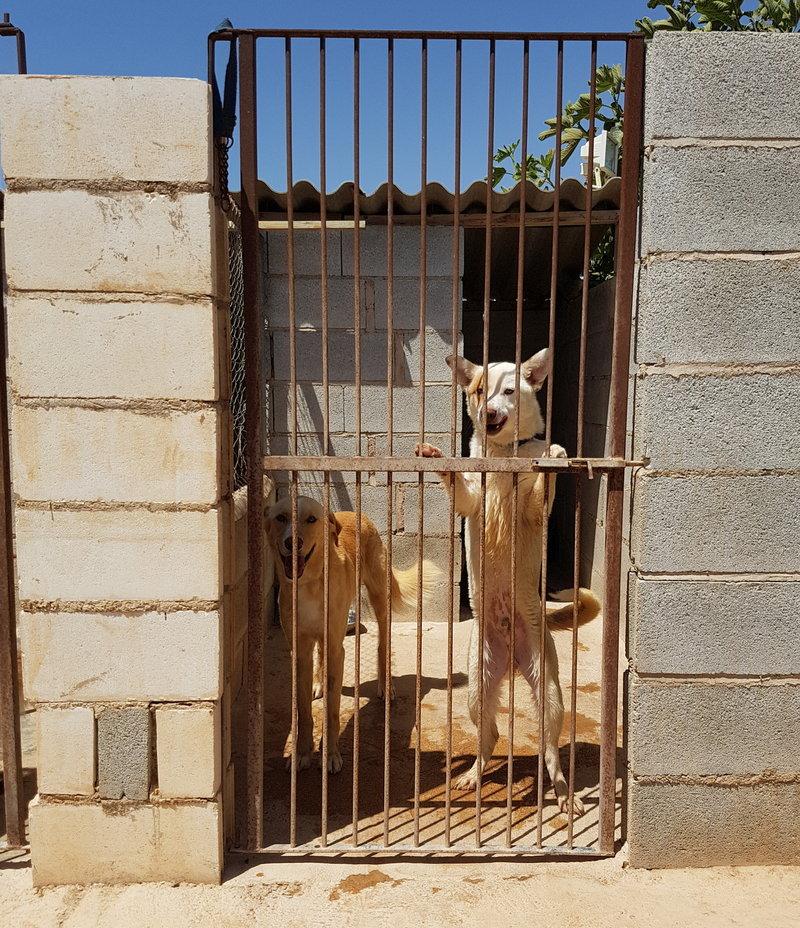 Bildertagebuch - Romeo  II, ist ein echter Darling einfach ein Traum von Hundebub ...VERMITTELT! 29766464wo