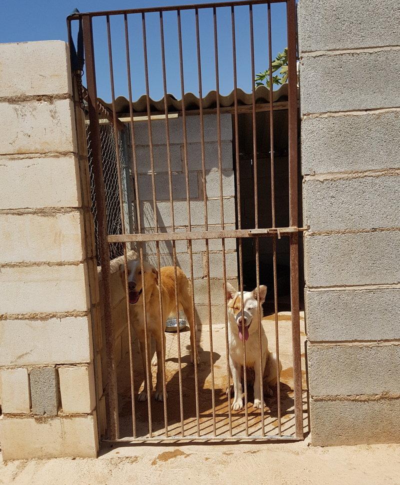Bildertagebuch - Romeo  II, ist ein echter Darling einfach ein Traum von Hundebub ...VERMITTELT! 29766465sy
