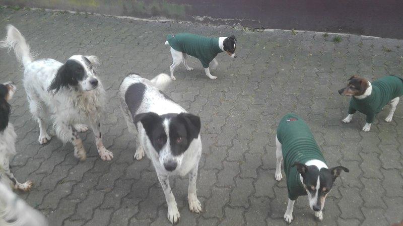 Bildertagebuch - Alwin, ein Junghund vom Pech verfolgt, hofft auf das große Glück...VERMITTELT! 29766768vt