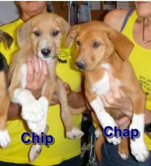 Bildertagebuch - Chip, verspielter Welpe sucht aktive Menschen...VERMITTELT! 29783410rd