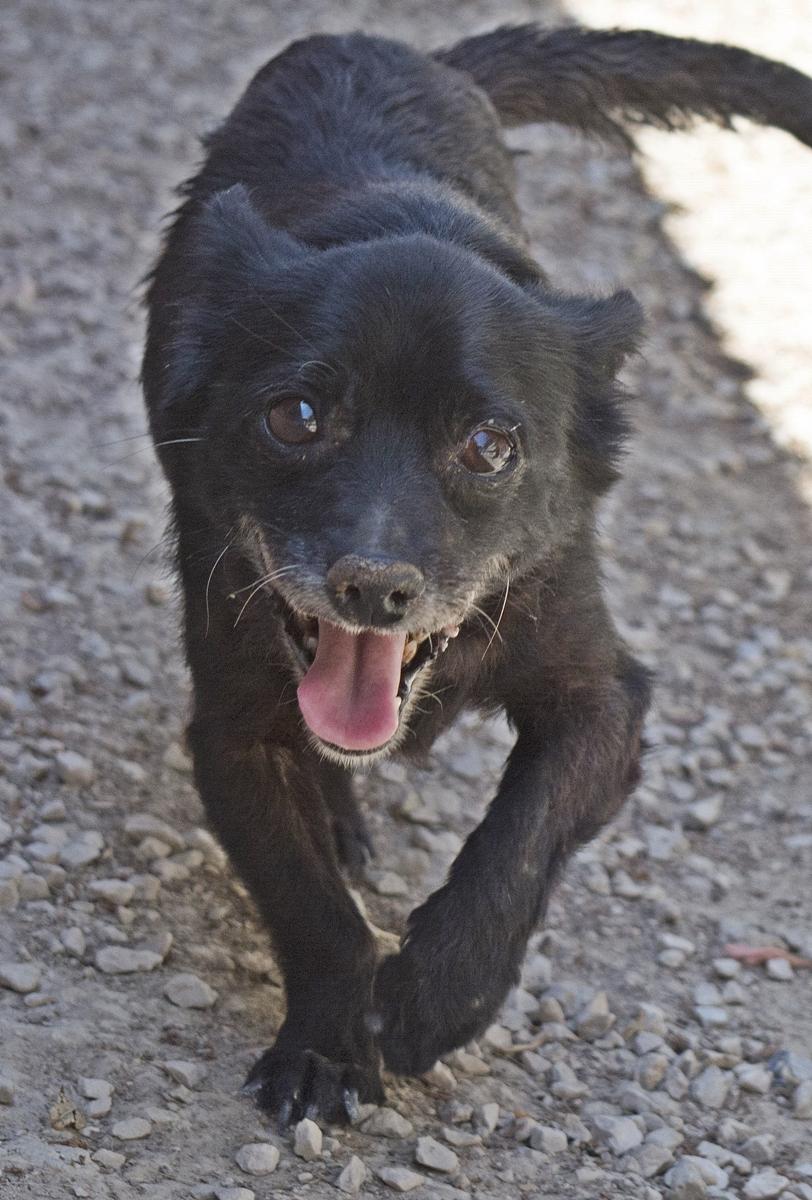 Bildertagebuch - Chipsa, die kleine Hundelady sollte mit knapp 7 Jahren schon sterben...VERMITTELT 29853998do