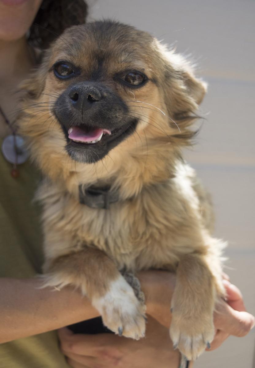 Bildertagebuch - Macarena, süßes kleines Hundemädchen wurde einfach ausgesetzt...VERMITTELT 29856527ui