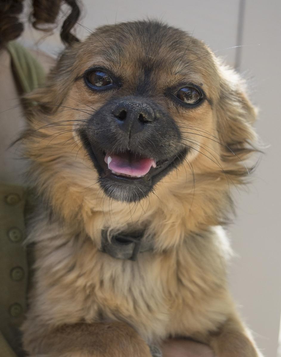 Bildertagebuch - Macarena, süßes kleines Hundemädchen wurde einfach ausgesetzt...VERMITTELT 29856528xt