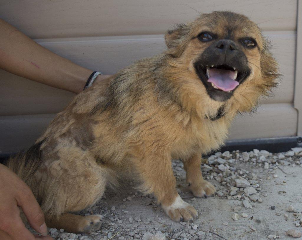 Bildertagebuch - Macarena, süßes kleines Hundemädchen wurde einfach ausgesetzt...VERMITTELT 29856530jk