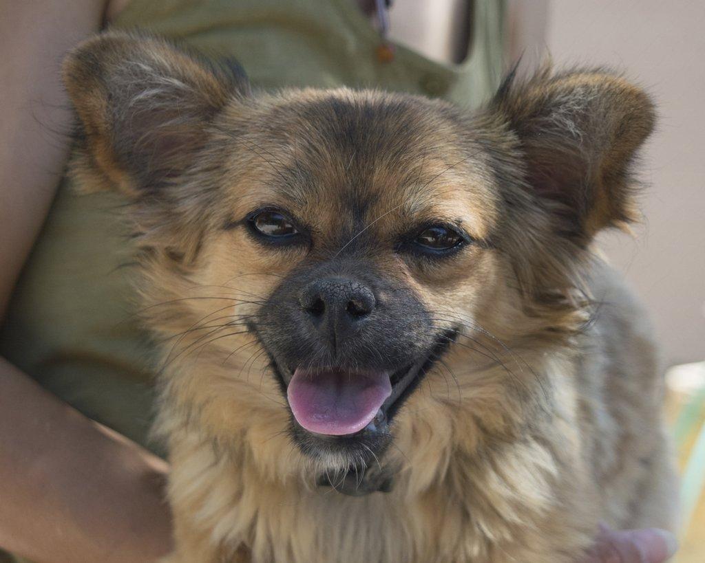 Bildertagebuch - Macarena, süßes kleines Hundemädchen wurde einfach ausgesetzt...VERMITTELT 29856531co