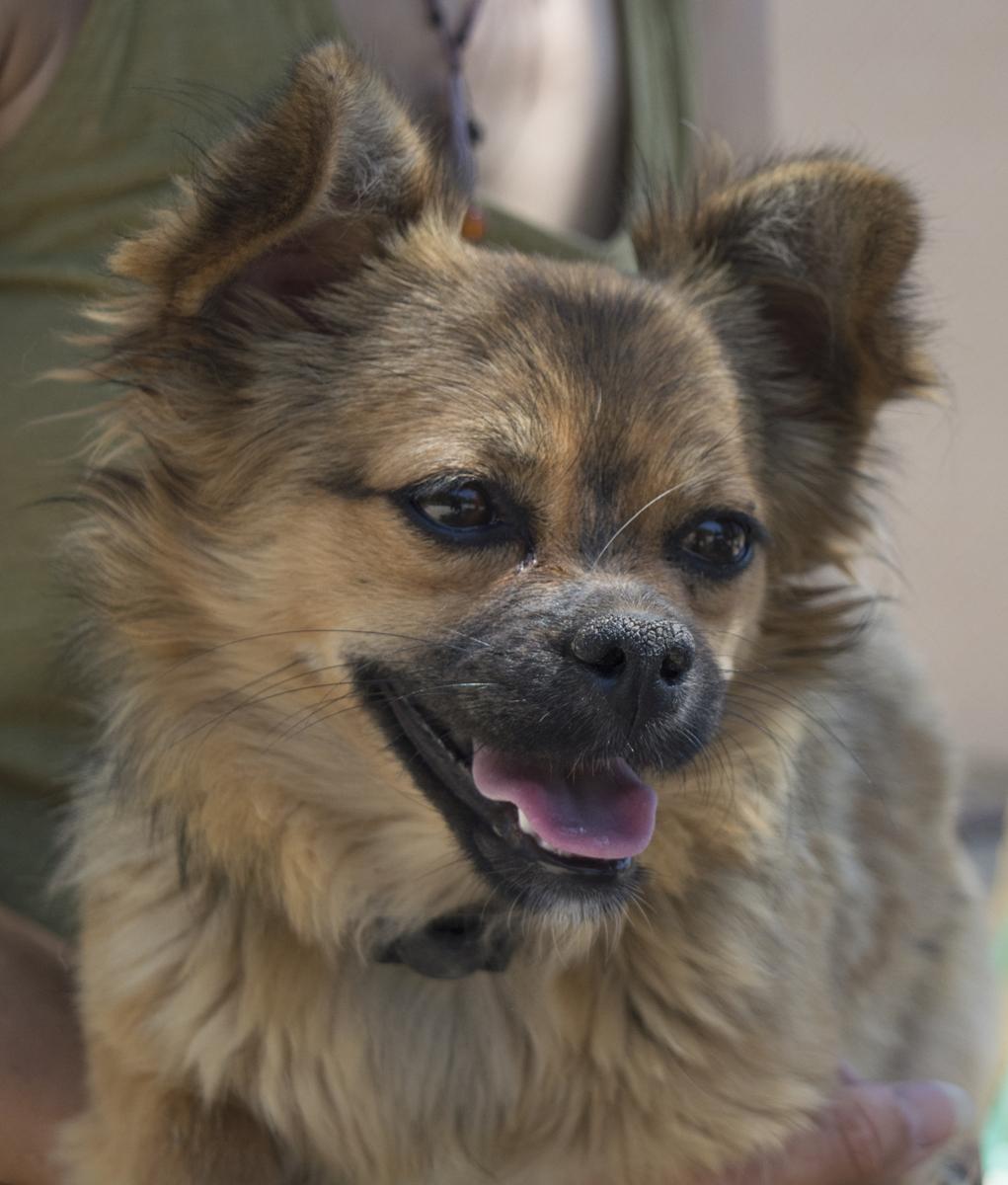 Bildertagebuch - Macarena, süßes kleines Hundemädchen wurde einfach ausgesetzt...VERMITTELT 29856533su