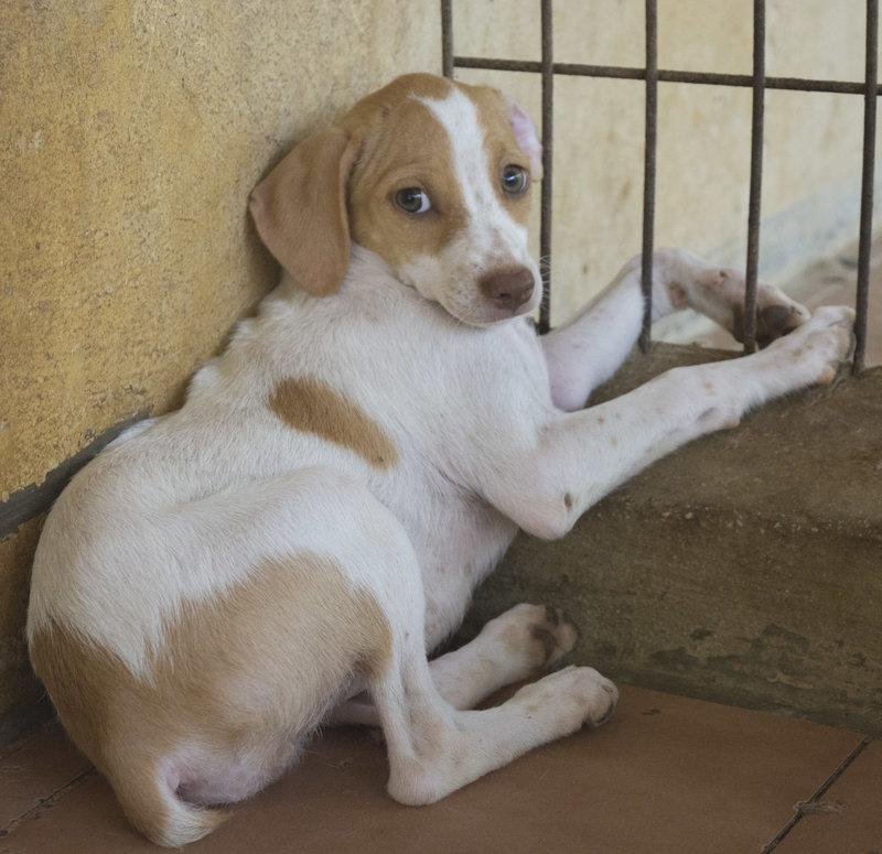 Bildertagebuch - Lisi: ein ganz zartes, süßes Hundekind - VERMITTELT - 29871773gs