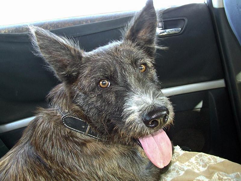 Bildertagebuch - Trixie: eine ungewöhnliche, sehr nette Hundedame hofft auf ihr Glück - VERMITTELT! 29969224yv