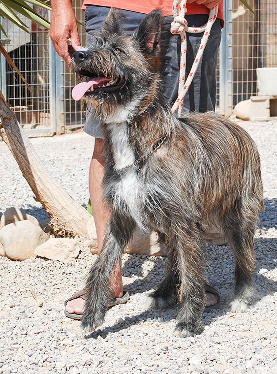 Bildertagebuch - Trixie: eine ungewöhnliche, sehr nette Hundedame hofft auf ihr Glück - VERMITTELT! 29969226rj