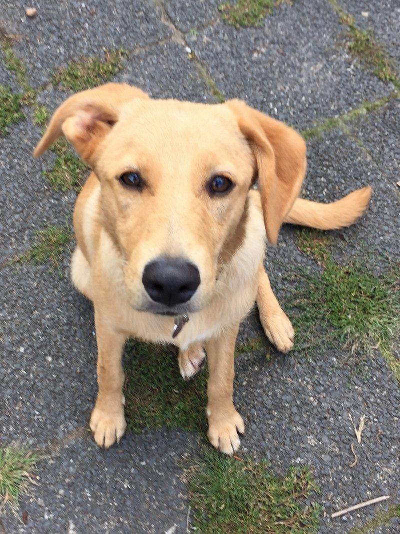 Bildertagebuch - Belle: junges Hunde- Fräulein wünscht eine eigene Familie...VERMITTELT! 30047568tp