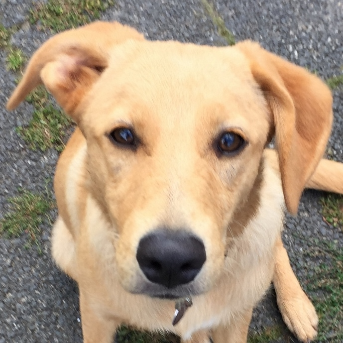 Bildertagebuch - Belle: junges Hunde- Fräulein wünscht eine eigene Familie...VERMITTELT! 30047569hv