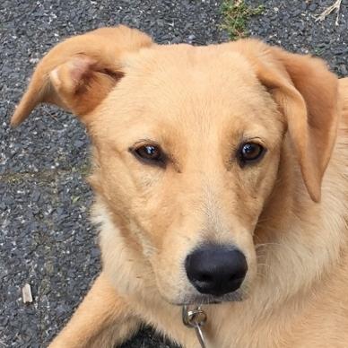 Bildertagebuch - Belle: junges Hunde- Fräulein wünscht eine eigene Familie...VERMITTELT! 30047572er
