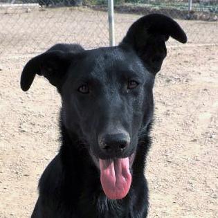 Bildertagebuch - Chico: der perfekte Hund, hübsch, gelehrig, freundlich und immer gut gelaunt - VERMITTELT - 30105213fv