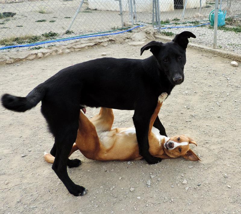 Bildertagebuch - Chico: der perfekte Hund, hübsch, gelehrig, freundlich und immer gut gelaunt - VERMITTELT - 30105221um