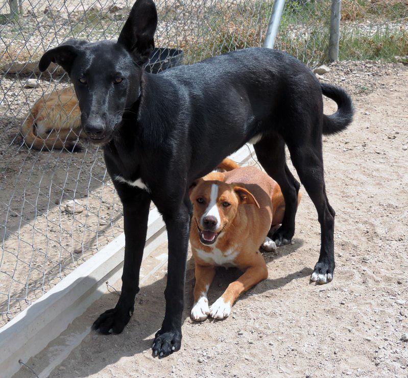 Bildertagebuch - Chico: der perfekte Hund, hübsch, gelehrig, freundlich und immer gut gelaunt - VERMITTELT - 30105224zq