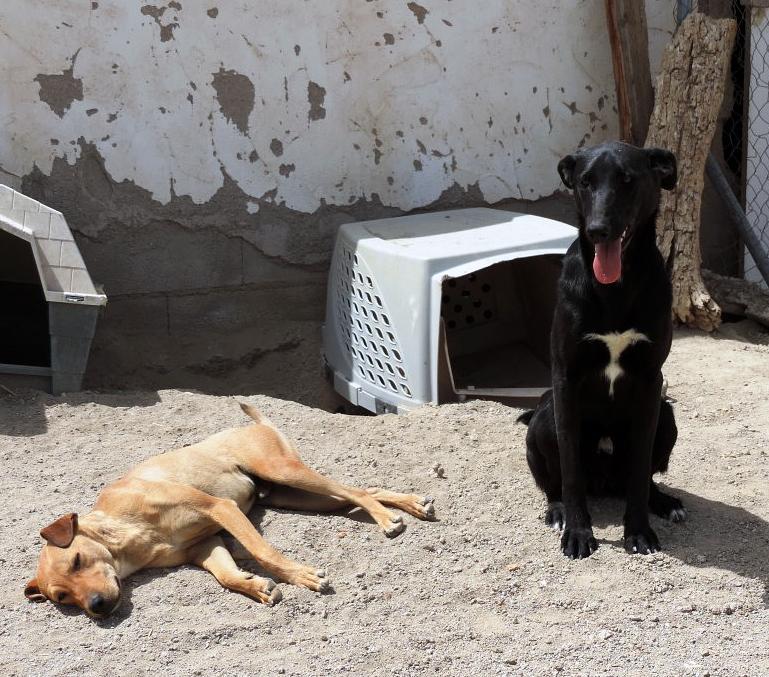 Bildertagebuch - Chico: der perfekte Hund, hübsch, gelehrig, freundlich und immer gut gelaunt - VERMITTELT - 30105227mv