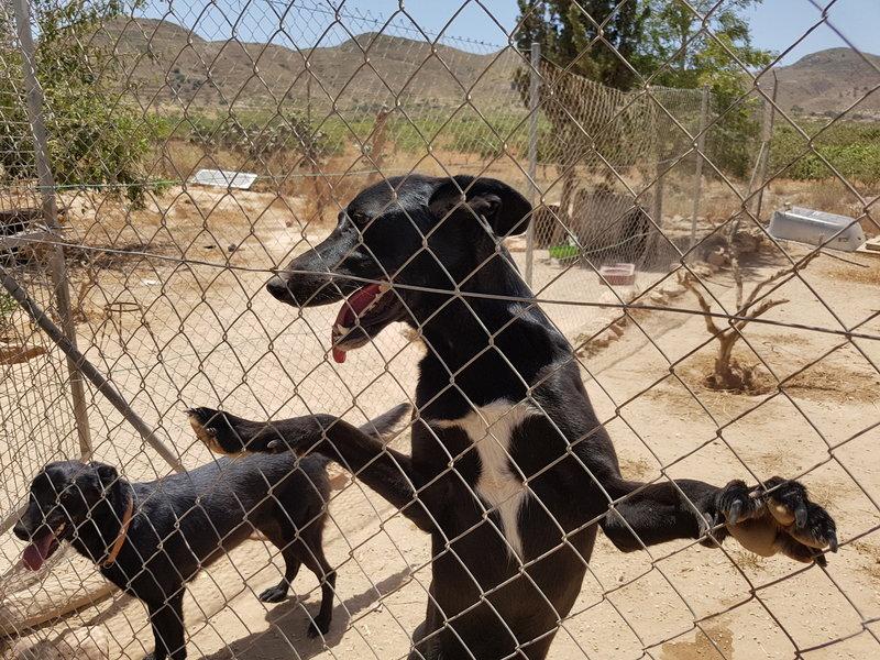 Bildertagebuch - Chico: der perfekte Hund, hübsch, gelehrig, freundlich und immer gut gelaunt - VERMITTELT - 30105232xw
