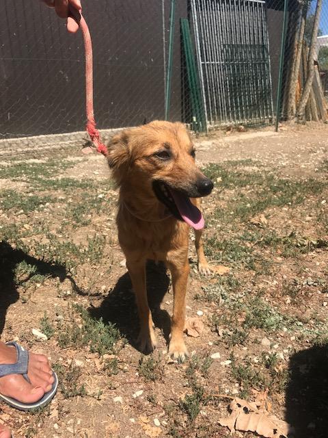 Bildertagebuch - Lola: hübsches, verträgliches, junges Hundemädchen sucht Familienanschluß - VERMITTELT! 30124052af