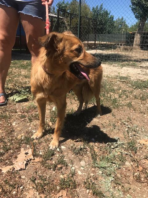 Bildertagebuch - Lola: hübsches, verträgliches, junges Hundemädchen sucht Familienanschluß - VERMITTELT! 30124054zt