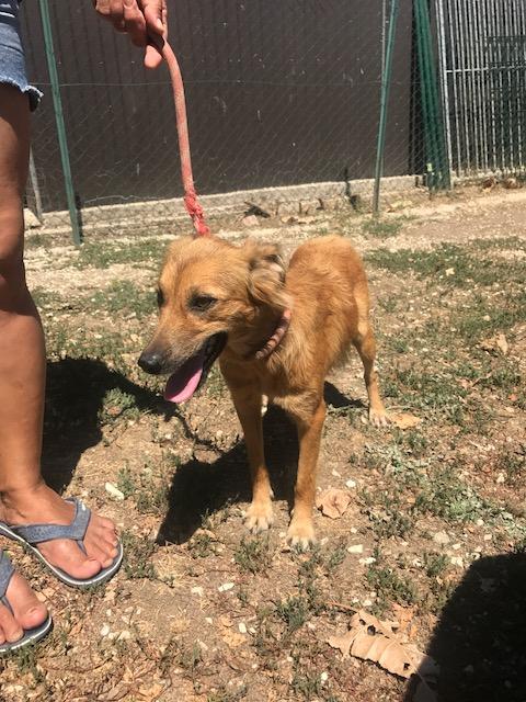 Bildertagebuch - Lola: hübsches, verträgliches, junges Hundemädchen sucht Familienanschluß - VERMITTELT! 30124056ve