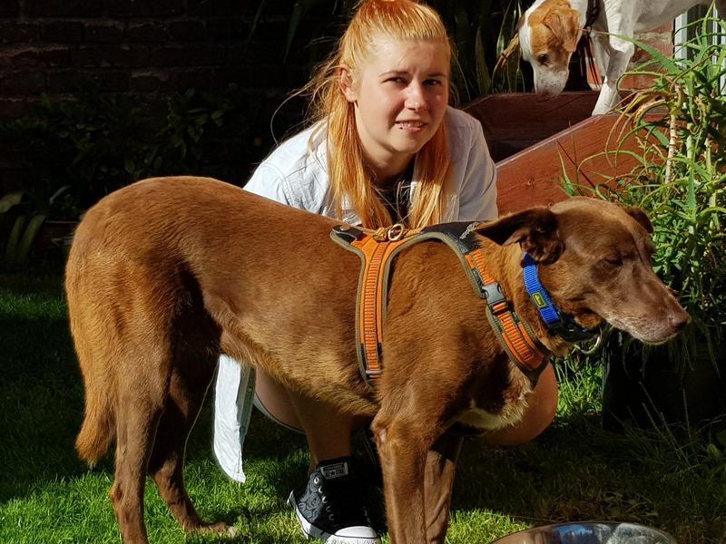 Bildertagebuch -  Lona II: super kinderliebe Hündin fristet seit Jahren ihr Leben im Tierheim - VERMITTELT - 30130259co