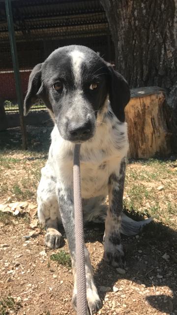 Bildertagebuch - Sadie: Ein Hundemädchen und ihr Traum von der eigenen Familie! 30155251xv