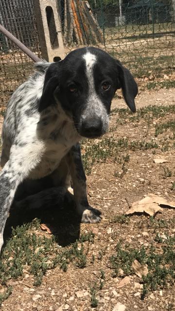 Bildertagebuch - Sadie: Ein Hundemädchen und ihr Traum von der eigenen Familie! 30155253ol