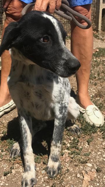 Bildertagebuch - Sadie: Ein Hundemädchen und ihr Traum von der eigenen Familie! 30155255tm