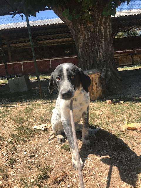 Bildertagebuch - Sadie: Ein Hundemädchen und ihr Traum von der eigenen Familie! 30155260pm